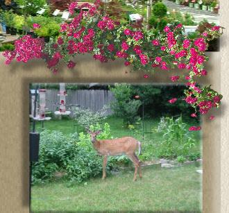 Deer resistant deer resistant plants mightylinksfo